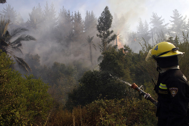 A firefighter sprays water into a forest that is burning in Valparaiso, Chile, Saturday, March 14, 2015. (Photo by Luis Hidalgo/AP Photo)