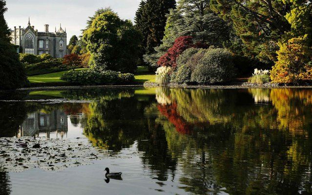 Autumn colours are reflected in a lake at Sheffield Park Gardens near Haywards Heath in Southern England October 7, 2013. (Photo by Luke MacGregor/Reuters)