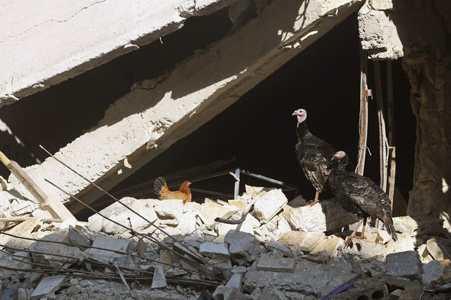 Birds stand amid damaged buildings in Aleppo January 1, 2015. (Photo by Hamid Khatib/Reuters)
