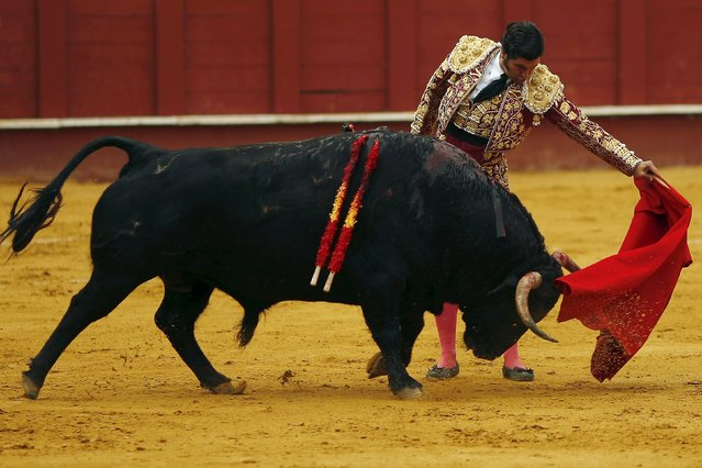 Spanish bullfighter Morante de la Puebla performs a pass to a bull during a bullfight at the Malagueta bullring in Malaga, southern Spain, April 4, 2015. (Photo by Jon Nazca/Reuters)