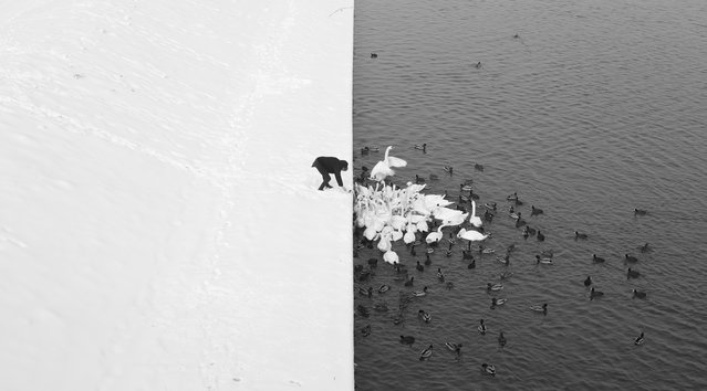 """""""A Man Feeding Swans in the Snow"""". Photograph was taken in Cracow from Grunwald Bridge. Contrast created by a nature of white snow and dark water separated by a line equal to the waterfront is a graphical reflection of the Yin-Yang symbol – opposing but complementary forces. Photo location: Cracow, Poland. (Photo and caption by Marcin Ryczek/National Geographic Photo Contest)"""
