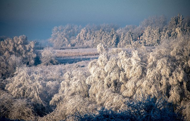 Frost covers the trees and fields in the town of Godewaersvelde, northwestern France on December 30, 2016. (Photo by Philippe Huguen/AFP Photo)
