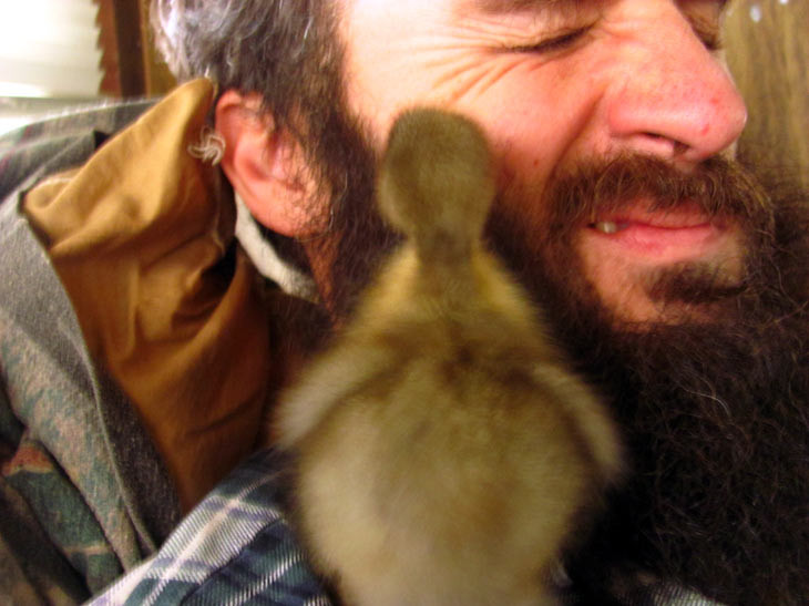 How this Man's Saved a Duckling