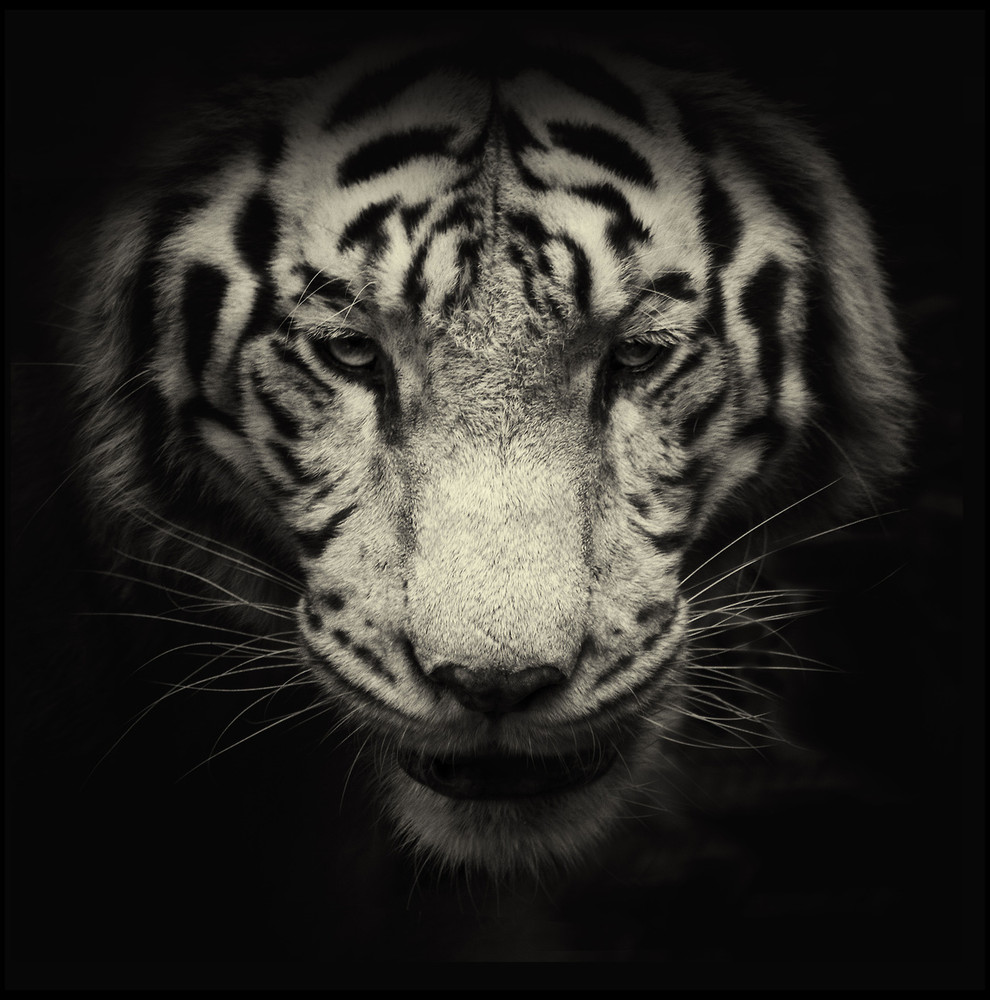 Animals in Black and White by Photographer Alex Teuscher