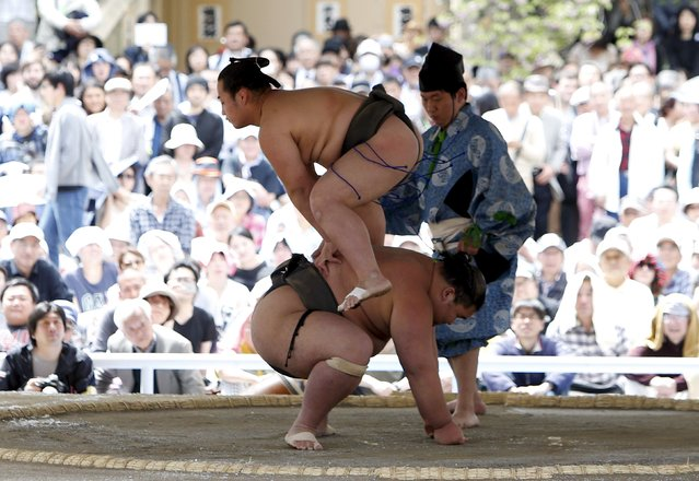 """Sumo wrestlers perform a show fight during the annual """"Honozumo"""" ceremonial sumo tournament dedicated to the Yasukuni Shrine in Tokyo, Japan, April 18, 2016. (Photo by Yuya Shino/Reuters)"""