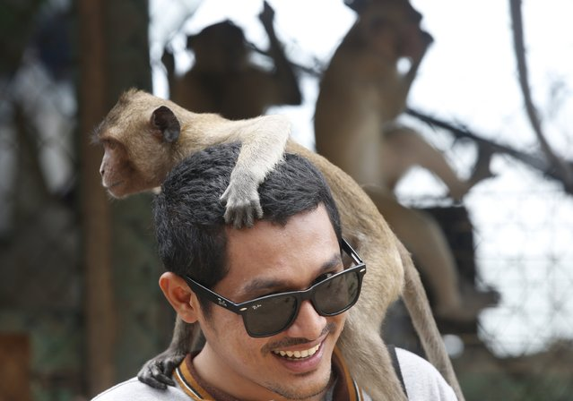 A monkey on a man's head at the viewpoint of Wat Khao Takiab temple, before Thai National Park officials caught them for sterilization in a bid to control the birth rate of the monkey population in Hua Hin city, Prachuap Khiri Khan Province, Thailand, 15 July 2017. (Photo by Narong Sangnak/EPA/EFE)