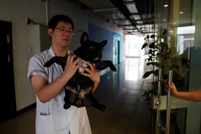 A dog is carried by a veterinarian after receiving its treatment at Shanghai TCM (Traditional Chinese Medicine) Neurology and Acupuncture Animal Health Center, which specialises in acupuncture and moxibustion treatment for animals in Shanghai, China on August 21, 2017. (Photo by Aly Song/Reuters)