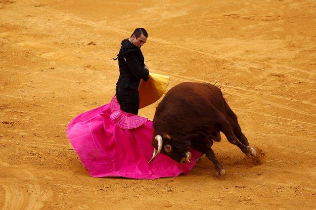 "Spanish bullfighter Jose Maria Manzanares performs a pass to a bull during the ""Corrida Goyesca"" bullfight in Ronda, near Malaga, southern Spain September 5, 2015. In the annual ""Corrida Goyesca"" fight in Ronda's historic bullring the bullfighters wear costumes from the era of 18th century painter Francisco Goya. (Photo by Jon Nazca/Reuters)"