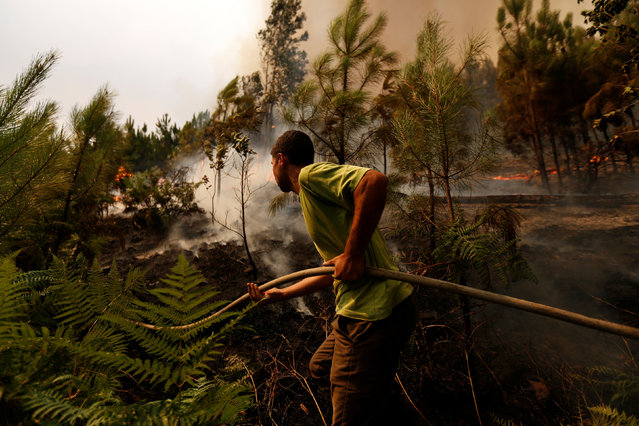 A man holds a hose as he tries to extinguish a forest fire at Macieira, Portugal August 13, 2016. (Photo by Rafael Marchante/Reuters)