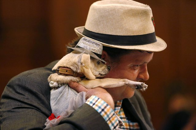 """Dean Clark embraces Frida, a female Chihuahua, as the San Francisco Board of Supervisors issues a special commendation naming Frida """"Mayor of San Francisco for a Day"""" in San Francisco, California November 18, 2014. (Photo by Stephen Lam/Reuters)"""