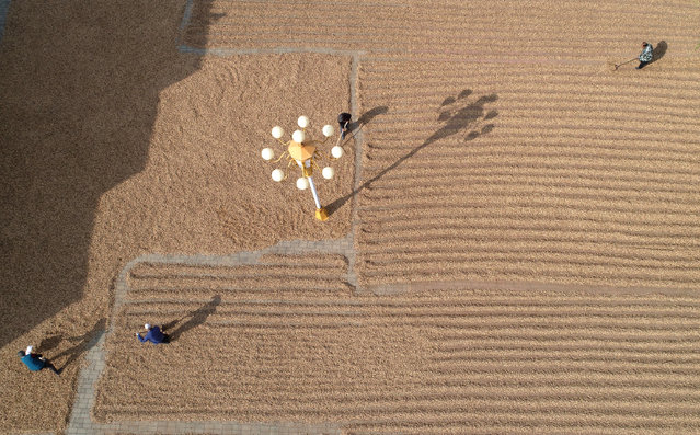 Aerial view of farmers working to dry peanuts at Longjiapu town on October 10, 2020 in Zhangjiakou, Hebei Province of China. (Photo by Chen Xiaodong/VCG via Getty Images)