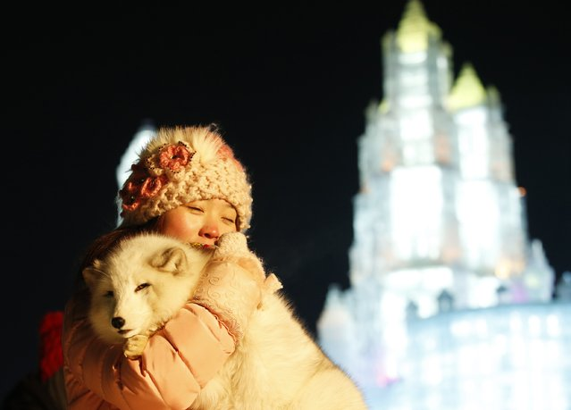 A woman takes her souvenir picture with a white fox in front of ice sculptures illuminated by coloured lights during the opening day of the 31st Harbin International Ice and Snow Festival in the northern city of Harbin, Heilongjiang province, January 5, 2015. The annual Ice and Snow Festival, organized by China National Tourism Administration and local governments, kicked off on Monday in Harbin. (Photo by Kim Kyung-Hoon/Reuters)