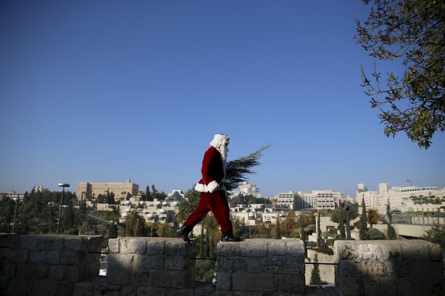Israeli-Arab Issa Kassissieh wears a Santa Claus costume as he walks atop a wall surrounding Jerusalem's Old City during an annual Christmas tree distribution by the Jerusalem municipality December 21, 2015. (Photo by Ammar Awad/Reuters)