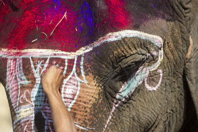 A Nepalese Mahut decorates an elephant before participating in an elephant beauty pageant as part of the 12th Chitawan Elephant Festival at Sauhara, Chitawan, some 154 kilometer from the capital of Kathmandu, Nepal, 28 December 2015. The five-day festival began on 26 December to spread awareness about wildlife and promote tourism. (Photo by Hemanta Shrestha/EPA)
