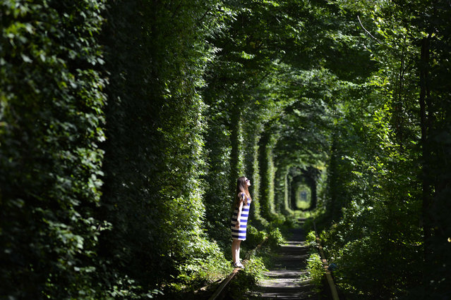 "A girl walks along former railway tracks in the so- called ""Tunnel of Love"", surrounded by arches of intertwined trees, near the Ukrainian village of Klevan, Rivno region, on August 6, 2018. The tunnel of about five kilometres in length is a botanical phenomenon, which became a cult place for tourists and couples in love. The tourist legend says that wishes of couples in love will come true, if the couple passes through the tunnel. (Photo by Sergei Supinsky/AFP Photo)"