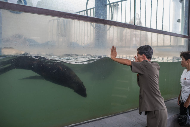Visitors look at sea lions in a tank at Pyongyang Central Zoo on August 19, 2018 in Pyongyang, North Korea. (Photo by Carl Court/Getty Images)
