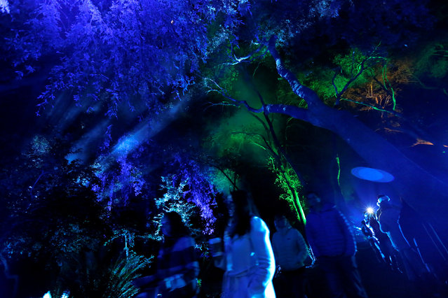 "Visitors walk through ""Ancient Forest"" at the exhibit ""Enchanted: Forest of Light"" at Descanso Gardens in La Canada Flintridge, California U.S., December 9, 2016. (Photo by Mario Anzuoni/Reuters)"