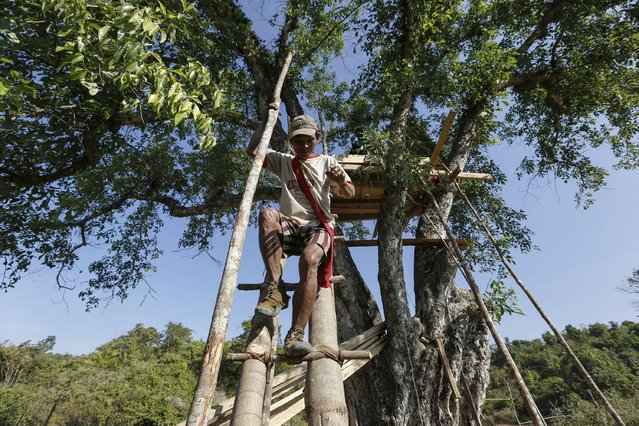 A villager comes down from his tree house, which acts as a shelter from wild elephants, in Gwe Cho village, Shwe Taung Yan township Ayeyarwady division January 18, 2016. (Photo by Soe Zeya Tun/Reuters)