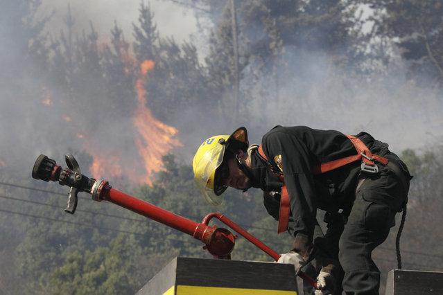 A firefighter prepares to spray a burning forest fire in Valparaiso, Chile, Saturday, March 14, 2015. (Photo by Luis Hidalgo/AP Photo)