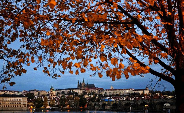 Autumn leaves are seen on a tree on the Vltava riverbank across from Prague Castle in the early morning in Prague, October 21, 2013. (Photo by David W Cerny/Reuters)