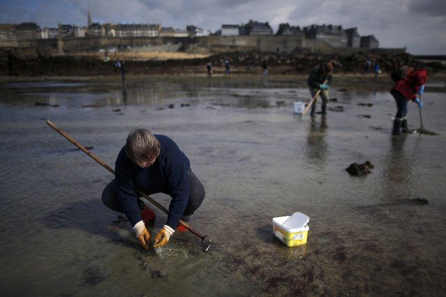 A woman digs for shellfish during a record low tide in Saint Malo, western France, March 21, 2015. (Photo by Stephane Mahe/Reuters)