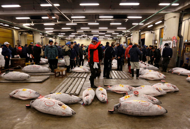Wholesalers check the quality of frozen tuna displayed at the Tsukiji fish market before the New Year's auction in Tokyo, Japan, January 5, 2017. (Photo by Issei Kato/Reuters)