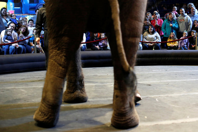 """Attendees watch as an elephant performs pre-show in Ringling Bros and Barnum & Bailey Circus' """"Circus Extreme"""" show at the Mohegan Sun Arena at Casey Plaza in Wilkes-Barre, Pennsylvania, U.S., April 29, 2016. (Photo by Andrew Kelly/Reuters)"""