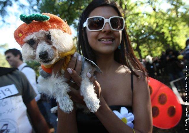 Halloween Dog Parade 2007