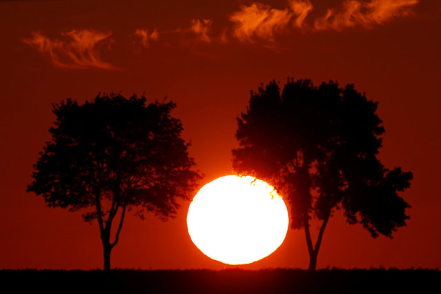 Trees are seen in silhouette during sunset in Baralle near Cambrai, France, July 20, 2019. (Photo by Pascal Rossignol/Reuters)