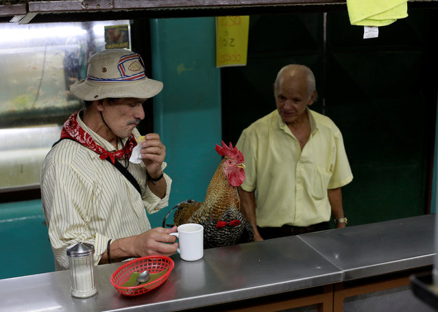 "Martin Herrera eats with his favourite rooster ""Paquito"" at the Central market in San Jose, Costa Rica April 27, 2017. (Photo by Juan Carlos Ulate/Reuters)"
