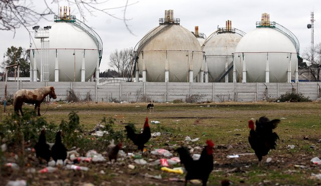 Liquefied gas tanks are seen at the General Belgrano gas processing plant of YPF Gas, as a horse and chickens walk on a field in Villa Palito, La Matanza, on the outskirts of Buenos Aires, Argentina, July 29, 2015. (Photo by Marcos Brindicci/Reuters)