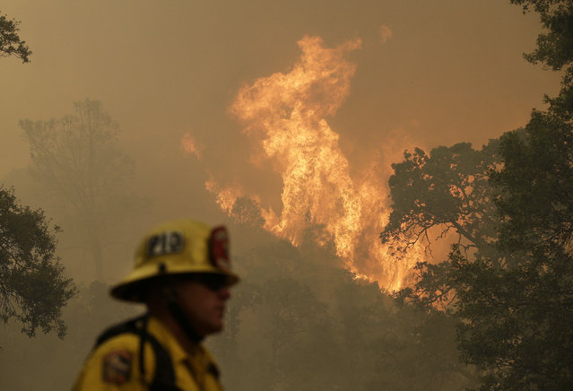 Cal Fire engineer Johnny Miller stands below a fire off of Morgan Valley Road near Lower Lake, Calif., Friday, July 31, 2015. (Photo by Jeff Chiu/AP Photo)