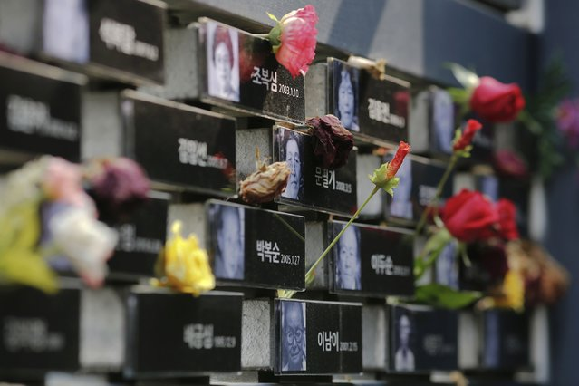 """Flowers are placed on a memorial wall commemorating the late former South and North Korean """"comfort women"""" at the War and Women's Human Rights Museum in Seoul, South Korea, July 22, 2015. (Photo by Kim Kyung-Hoon/Reuters)"""