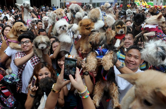 Owners raise their pets for a blessing from the Roman Catholic church to celebrate World Animal Day in Manila on October 5, 2014. The day began in Florence, Italy, in 1931 at a convention of ecologists, whose intention was to highlight the plight of endangered species and October 4 was chosen as the date because it is the feast day of nature lover Francis of Assisi, the patron saint of animals and the environment. (Photo by Jay Directo/AFP Photo)