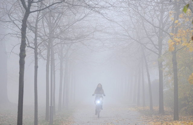 A cyclist makes her way through a foggy alley in Celle, central Germany, on November 15, 2012. Meteorologists forecast sinking temperatures and cloudy sky for the region. (Photo by Julian Stratenschulte/AFP Photo)