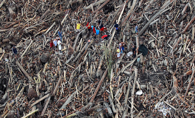 Uprooted coconut trees lie in ruin as residents and rescue workers look for survivors at a coconut plantation in the aftermath of Typhoon Bopha in Compostela Valley in the southern Philippines, December 7, 2012. (Photo by Jay Morales/AFP Photo)