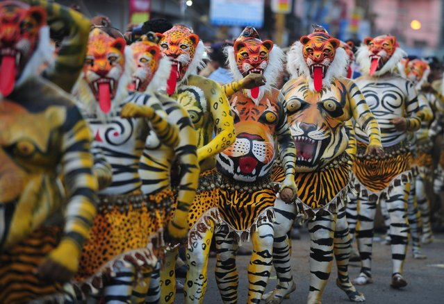 "Indian performers painted as tigers take part in the ""Pulikali"", or Tiger Dance, in Thrissur on September 17, 2016. The folk-art event is held every year in the town during the ""Onam"" festival. (Photo by Arun Sankar/AFP Photo)"