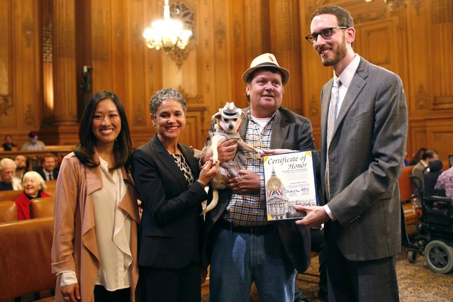 """(L-R) Supervisor Katy Tang, San Francisco Animal Care and Control Acting Director Miriam Saez, Frida, a female Chihuahua, dog owner Dean Clark and Supervisor Scott Wiener pose for a photograph after the San Francisco Board of Supervisors issued a special commendation naming Frida """"Mayor of San Francisco for a Day"""" in San Francisco, California November 18, 2014. (Photo by Stephen Lam/Reuters)"""