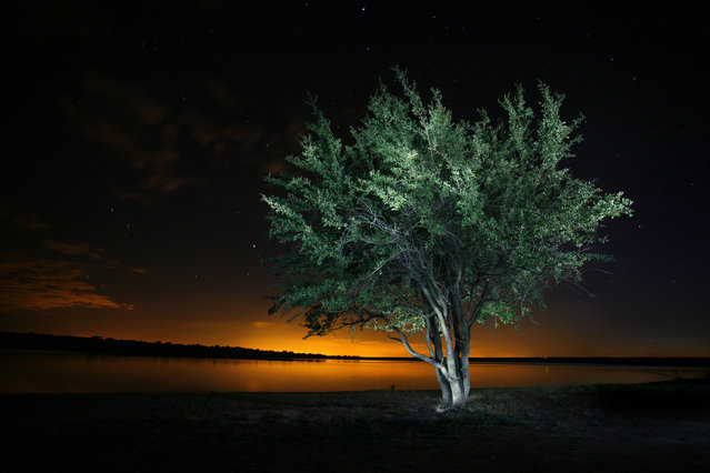 """Glowing Tree"". On a fishing trip in Mpumalanga, South Africa I took this photo of this tree next to Klipvoor Dam. The golden light in the background was cast by a nearby settlement's lights. I lit the tree up with a torch painting it over a period of a minute and a half.  (Photo and caption by Erlo Brown/National Geographic Traveler Photo Contest)"