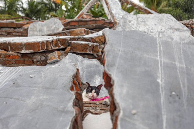 A cat is seen through the rubble of a house badly badly damaged by earthquake in Mamuju, West Sulawesi, Indonesia, Tuesday, January 19, 2021. (Photo by Yusuf Wahil/AP Photo)