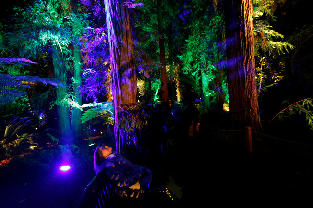 """Visitor Stephanie Becker sits on a bench at """"Ancient Forest"""" at the exhibit """"Enchanted: Forest of Light"""" at Descanso Gardens in La Canada Flintridge, California U.S., December 9, 2016. (Photo by Mario Anzuoni/Reuters)"""
