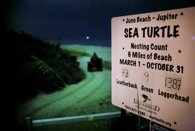 A spotter with the Loggerhead Marinelife Center rides her ATV onto Juno Beach to search for nesting leatherback sea turtles. Each spring, the center dispatches biologists and technicians along an 11-mile stretch of beach between Jupiter Inlet and Lake Worth Inlet to document and research the critically endangered turtles. (Photo by Greg Lovett/The Palm Beach Post)