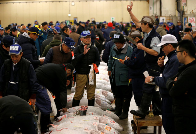 An auctioneer (R) raises his hand as he starts the New Year's auction of the frozen tuna while wholesalers check the quality of frozen tuna displayed at the Tsukiji fish market in Tokyo, Japan, January 5, 2017. (Photo by Issei Kato/Reuters)