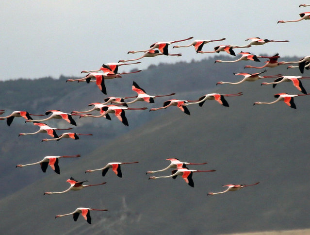 Flamingos are seen at the Mogan Lake in Ankara, Turkey, August 9, 2021. (Photo by Xinhua News Agency/Rex Features/Shutterstock)
