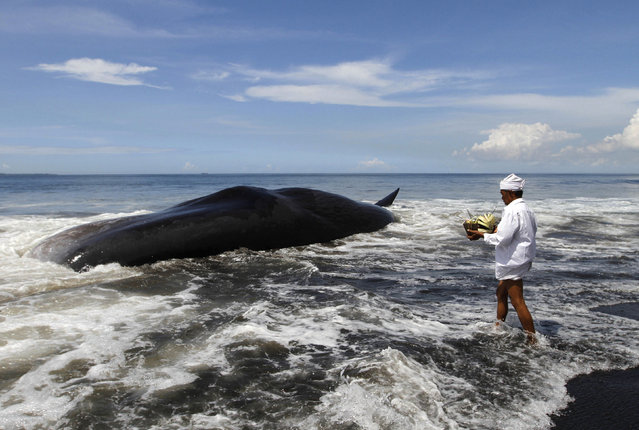 A Balinese Hindu priest makes an offering to a dead sperm whale washed ashore on Batu Tumpeng beach near Denpasar on Indonesia's resort island of Bali, March 14, 2016. (Photo by Roni Bintang/Reuters)