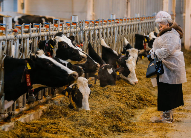 """A woman watches as cows feed on robotic dairy farm on the CJSC """"Lenin State Farm"""" near Moscow, Russia, 08 February 2017. CJSC """"Lenin State Farm"""" is one of the better farming system operating in Russia. The robotic dairy farm was build using equipment and technology of the Netherlands company """"Lely"""". The farm consists of eight milking robots that cater to 1,050 cows. The farm is operated with only three workers working full time. (Photo by Sergei Ilnitsky/EPA)"""