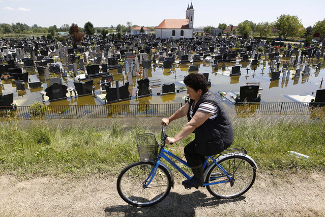 A Bosnian woman cycles past a flooded cemetery in the village of Domaljevac near the Bosnian town of Orasje along river Sava, 200 kms north of Bosnian capital of Sarajevo, on Wednesday, May 21, 2014. Floodwaters receded Wednesday in Bosnia and Serbia, just enough to reveal the next shock: recovery from the historic flood will probably cost billions of euros that neither of the countries has. (Photo by Amel Emric/AP Photo)