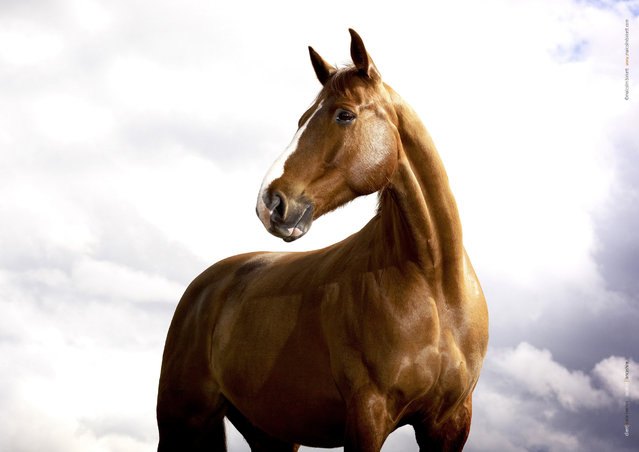 Horse photography By Tim Flach