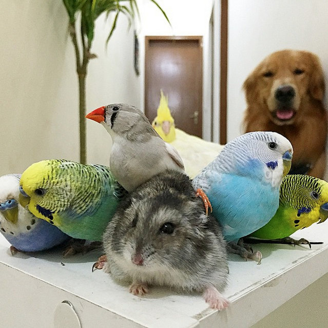 Bob The Golden Retriever And His friends