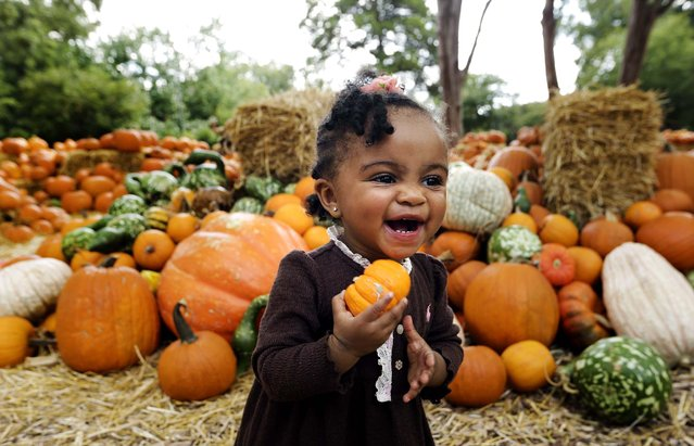 Zion Elzie carries a pumpkin at Pumpkin Village in the Dallas Arboretum and Botanical Garden, Tuesday, September 30, 2014, in Dallas. (Photo by L. M. Otero/AP Photo)